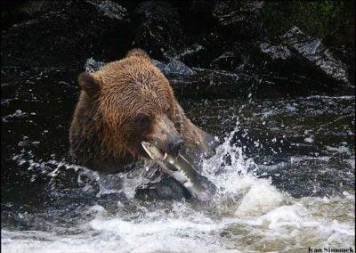 Alaska-Waters-bear-Br.b.fish