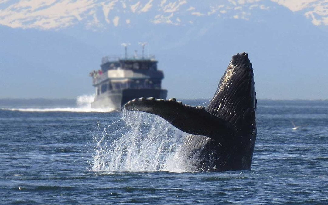 When and where to see whales in Alaska