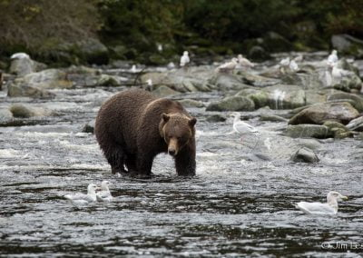 alaska-waters-bear-river