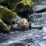 alaska-waters-bears-river
