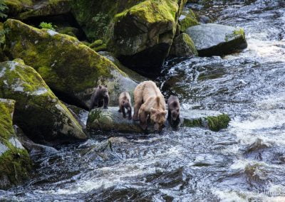alaska-waters-bears-river
