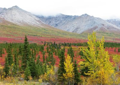denali-atv-autumn-colours-3