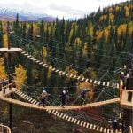 denali-park-zipline-walkways