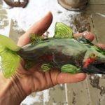 LumelStudios Services Commission Salmon