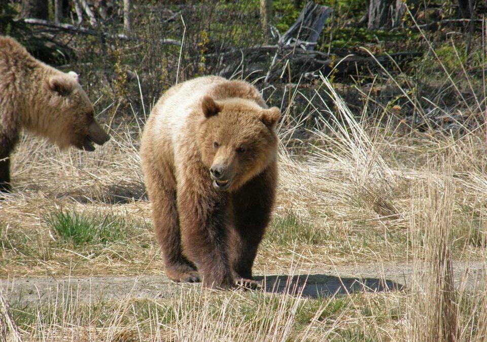 Ten places to view wildlife
