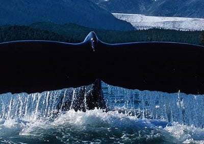 Alaska Fjordlines