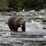 alaska-waters-bear-river