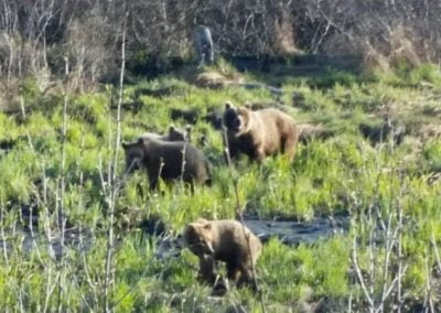 Valdez KOA Bears