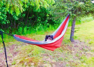 dog-in-hammock